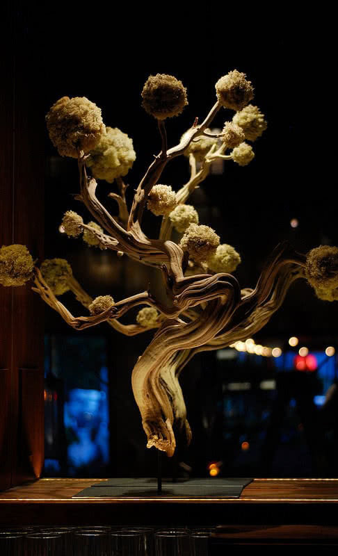 Posana Restaurant Asheville NC Japanese Bonsai Tree Fixture and Finish Selection